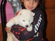 Gorgeous AKC Siberian Huskies Puppies for Sale..(732) 708-2298