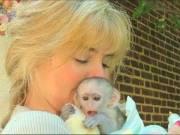 Wonderful Capuchin Monkeys Available (631) 343-8473