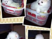 Angelitic  Teacup POMERANIAN Puppies Available For Adoption Text (701) 660-2572