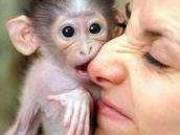 Both sex Capuchin Monkeys for your family (my bundle of joy)
