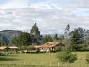 Ayahuasca healing retreats