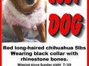 HElP LOST DOG