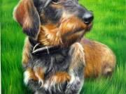 Pet Portrait From Photo