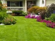 Landscaping Designs & Plant Service