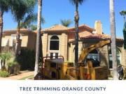 Tree Trimming Orange County CA
