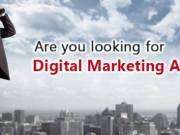 Are you looking for a professional and experienced Digital Marketing Agency in California, USA?
