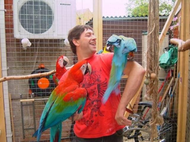 Fertile parrots eggs and babies for sale - Los Angeles