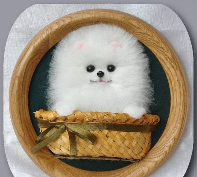 Priceless White Pomeranian Puppy For Adoption - Newark, 673