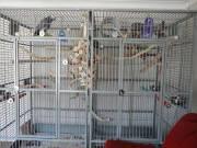 Grap your Parrot eggs now..