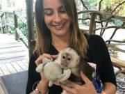 Charming Capuchin Monkeys For Adoption