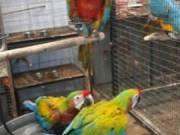 Healthy Ostrich Chicks & Eggs, Parrot Eggs, Chicken Eggs, Fertilized / Hatching  Egg incubator