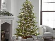 Beautiful Christmas Tree Lights for All Occasions