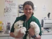 Adorable Maltese puppies text or call +1(909)-689-8380