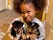 Gorgeous Teacup Yorkie puppies