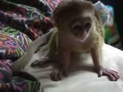Male and Female Monkeys..(678) 719-0332