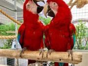 Parrots For Sale (https://www.v-b-h.net/)
