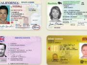Buy Original Driver's License