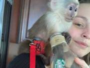 Capuchin Monkey contact-(678) 391-3449